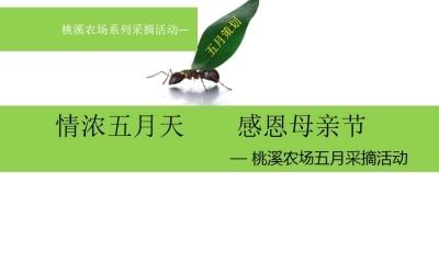 """节日活动""""情浓五月天-感恩母亲节""""桃溪农场采摘活动推广策划方案"""